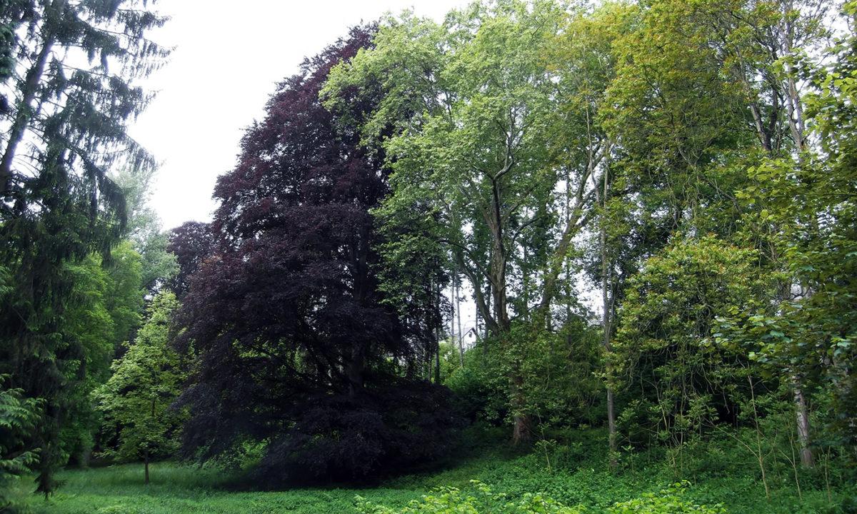 Gartendenkmalpflege Gartenhistorische Untersuchung Projekt Park Kloster Marienberg
