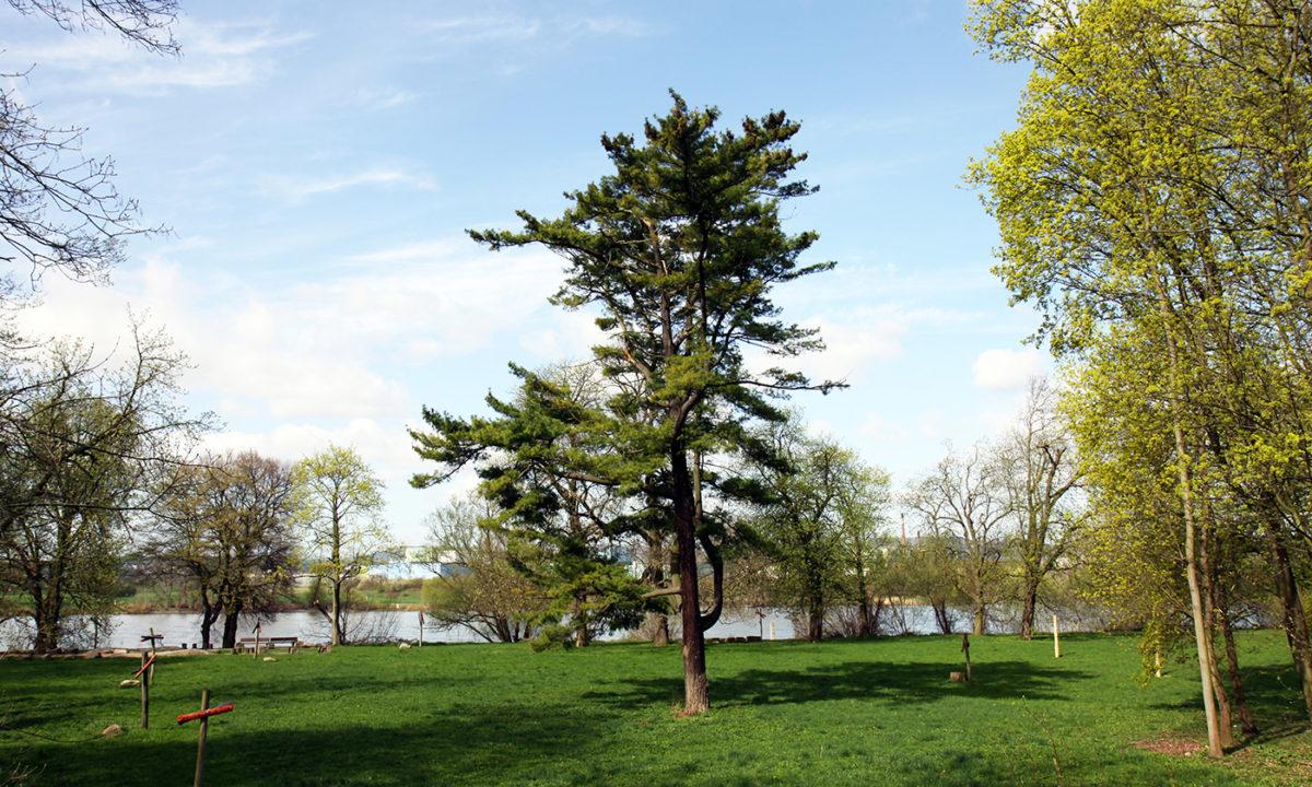Gartendenkmalpflege - Beschreibung der historischen Entwicklung des Schlossparks Neuwied und Denkmalbewertung